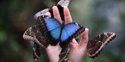 Нижегородский дом бабочек