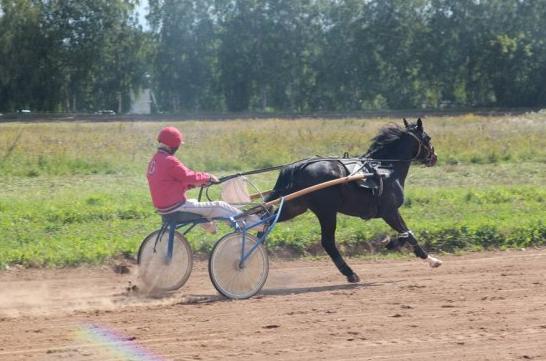 Приз Золотая осень (конные испытания)
