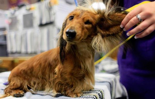 Выставка собак РКФ всех пород