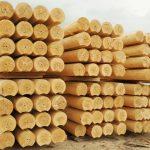 А знаете ли вы, что каждому гражданину России по закону полагается бесплатно 150 кубов древесины?