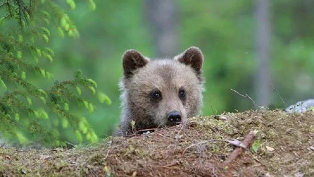 Занятие для детей: Самый лучший медведь