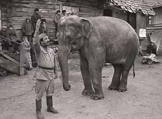 Кинопоказ Солдат и слон