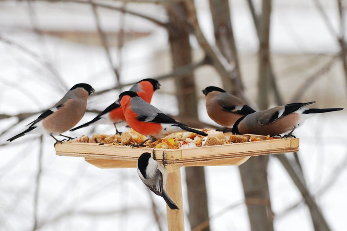 творческое занятие Покормите птиц зимой