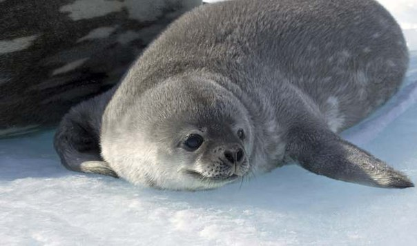 фотовыставка Антарктика
