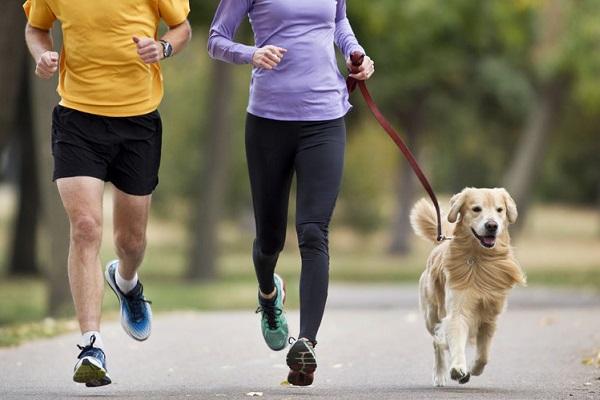 благотворительный забег с собаками