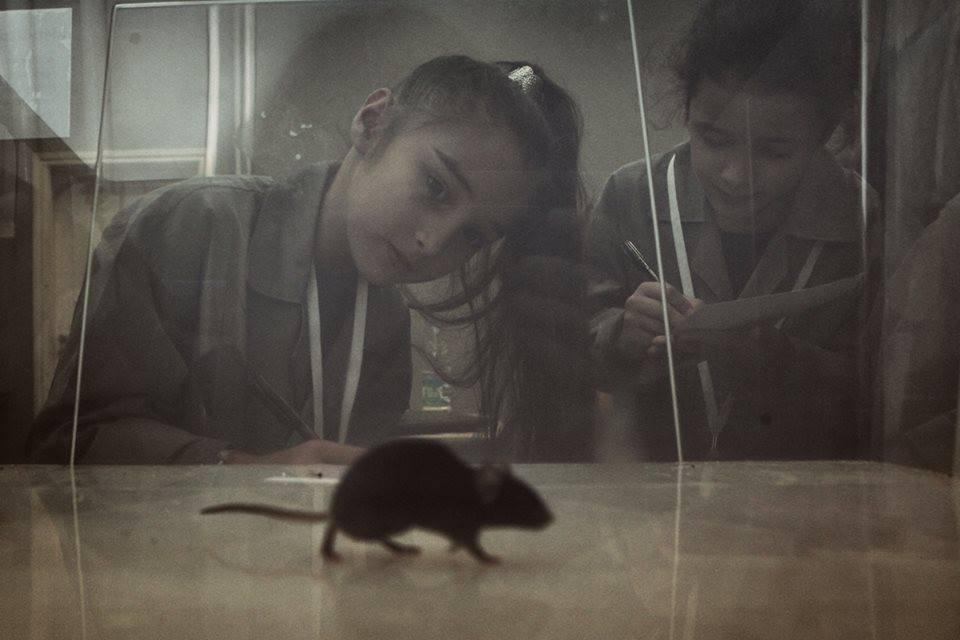 Биологические эксперименты. Научная интерактивная программа
