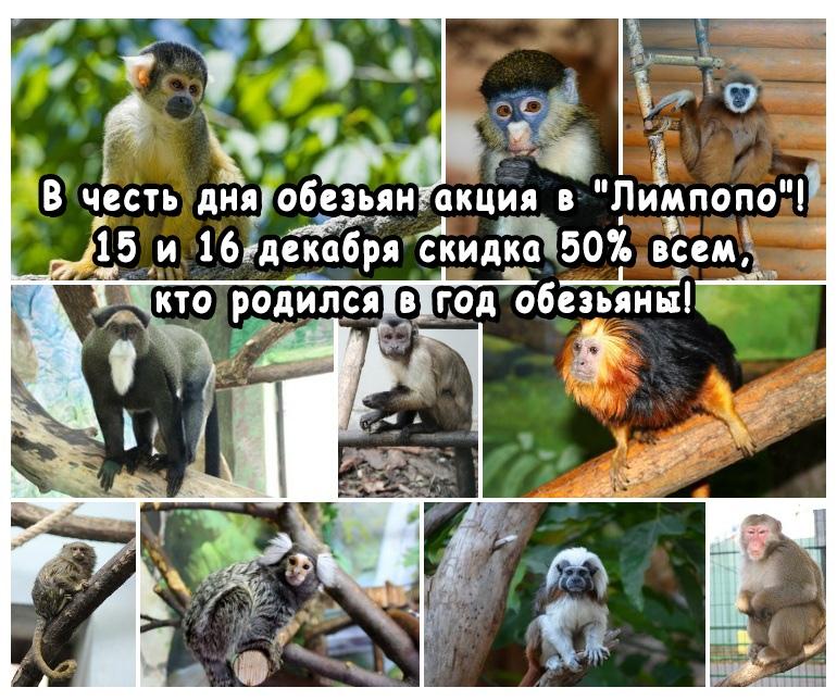 скидка 50% на билеты всем, кто родился в год обезьяны