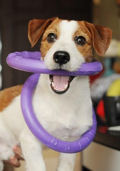 Отборочный Чемпионат НО по DOG-PULLER