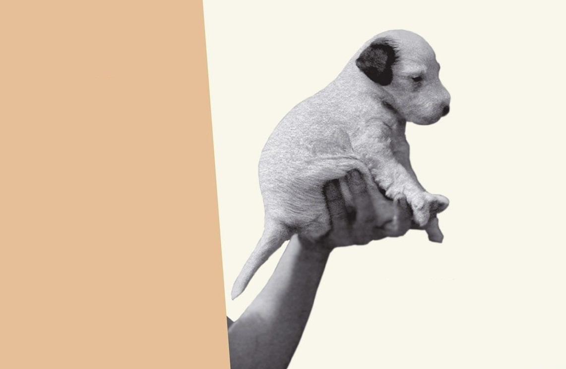 театрализованное чтение «Дашенька, или история щенячьей жизни»