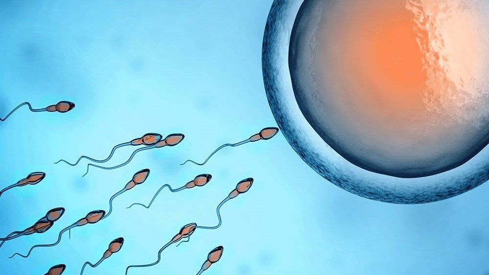 Конференция «Актуальные вопросы эмбриологии»