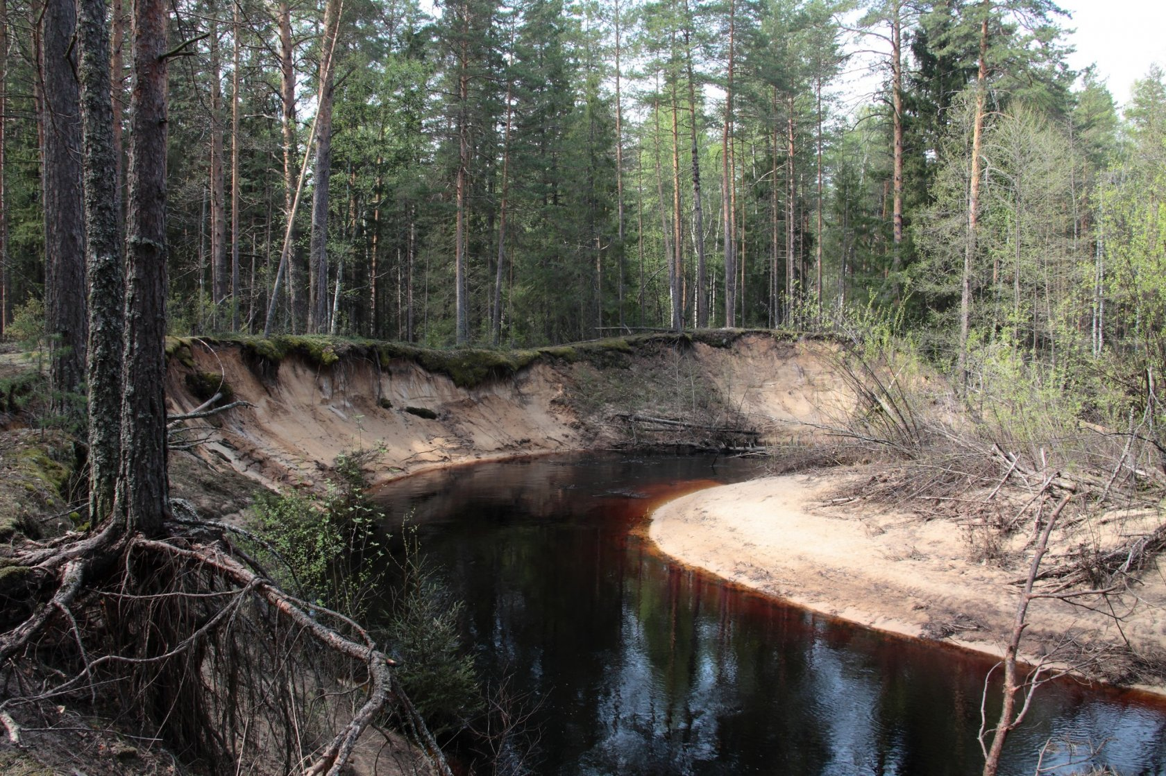 Экологическая экскурсия «Заповедники Нижегородского края»