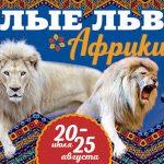 Цирковое шоу «Белые львы Африки»!