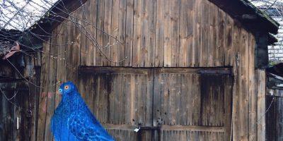 Граффити и Стрит-Арт Голубь