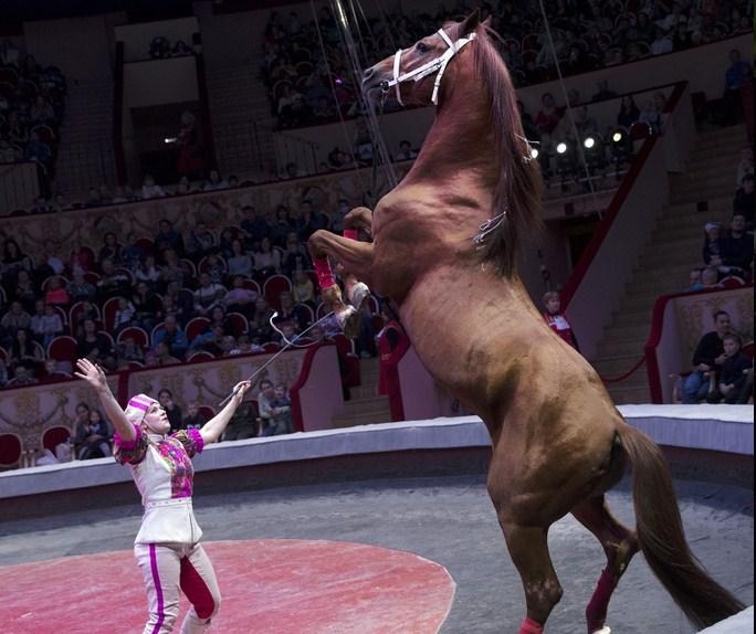 Новая цирковая программа ДЖУНГЛИ